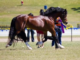 STOCK - Gold Coast Show 303 by fillyrox