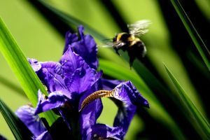 Bee by MarvinOstersolm