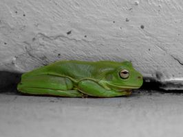 Green Tree Frog at Rest by AfroDitee