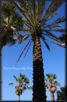 Under The Palms by SassyPants61762