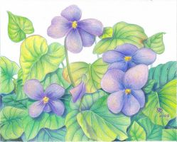 Verithins Violets by robertsloan2