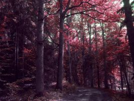 Red Forest by Erin666