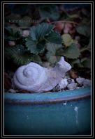 Snail by DesignKReations