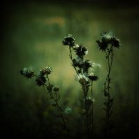 Green by natdia