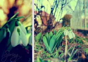 spring fairy coming soon by Sylwe