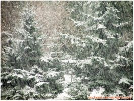 The Snow Is Back-1 by eMBeeL