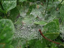 wet spiderweb #1 by rikumario
