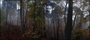November Forrest... by MichiLauke