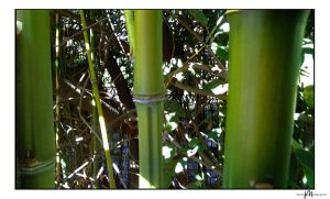 Bamboo Stalks by Mbitions-Markus