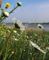 Wild flowers at the riverside by MDGallery