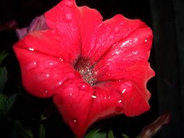 Red little flower by 1photo