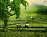 :: i love my ricefield ::: by ASEPNEUNEU