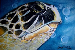 Turtle 2 by artwoman3571