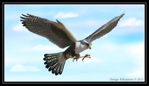 Peregrine Falcon by DesignKReations