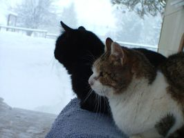Kitties on a snowy day by Marcusstratus