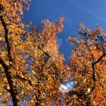 Colors of the Fall by HarmsWayApparel