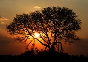 Zambian sunset 2 by ronald87