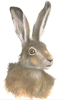 Hare by blackbrumby