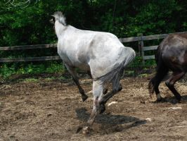 Appaloosa 67 by Spotstock