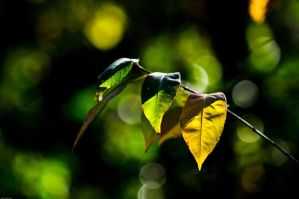 Green to yellow leaves by Citruspers