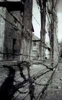 The cold babwire of Auschwitz by themjj