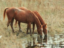 Friends by OECDLapushfan101