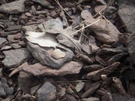 Rocks and Burnt Paper.2 by xxzimmer483xx