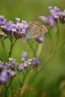 Beauty in green and blue by aripi
