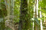 2014-kondalilla-tree-ferns by tbg-stock-images