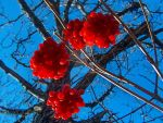 Red touches blue by gallardo24