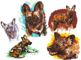 African Wild Dogs by BooYeh