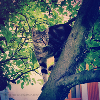 My cat in a tree by Peace-Cat