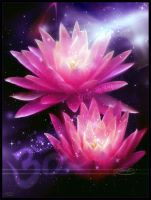 Lotus of the heart by Nameda