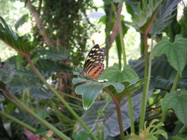 Life of a Butterfly II by merribelle