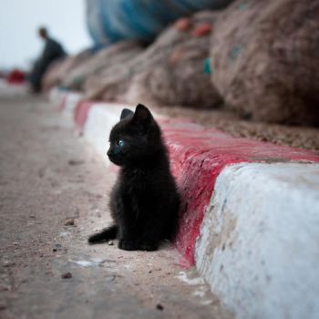 a small black cat by butterfly-heaven