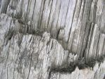 Texture - Wood 25 by SanStock