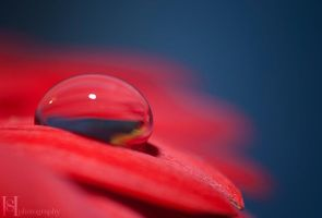 Red Drop by Sato-photography