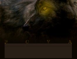 Wolf RP by lutara123