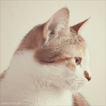 cat side portrait by Merry339