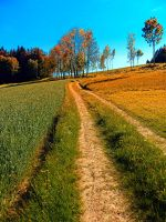 Hiking trail following the trees by patrickjobst