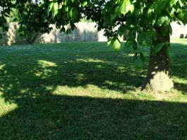 Lawn Shadows by TheLimeTangerine