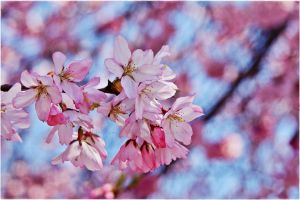 I D r e a m In Blossom Pink by GrotesqueDarling13