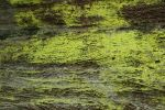 Texture 91 by Malleni-Stock