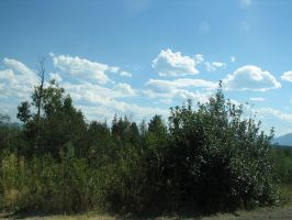 Trees and Clouds by gir-is-me
