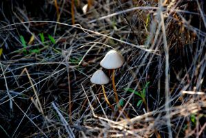 Little Mushrooms by goucha
