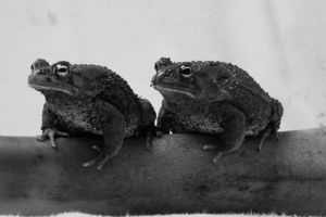 The Toads by Shiskababe