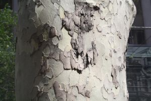 A Tree's Texture V by FreeakStock