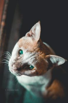 Cat by hallaexpress
