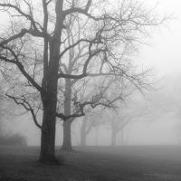 The fog will lift by mj-magic