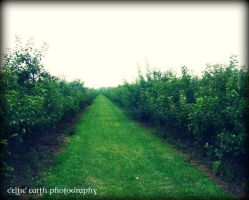 Orchard II by CelticEarth